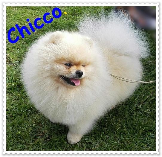 Chicco Ancarado