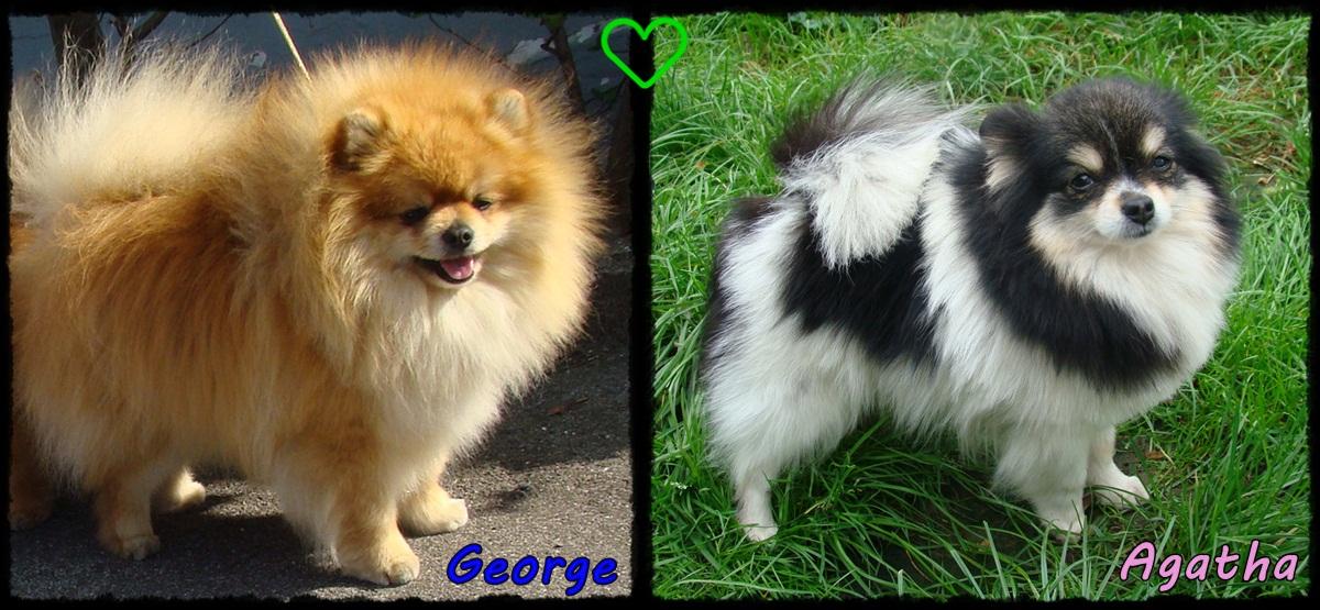 George + Agatha