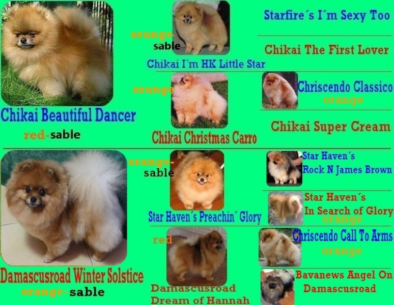 Pedigree of Royal Poms Liberty Luisa