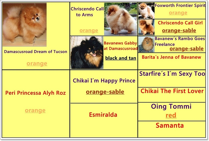 Pedigree of Amanda Jones at Royal Poms