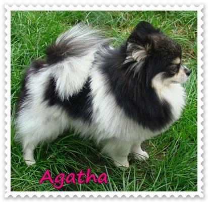 Agatha Cherie Boheme