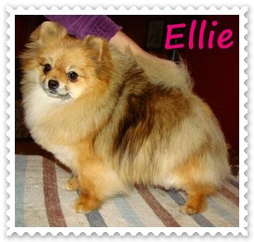 Elegant Ellie Ancarado
