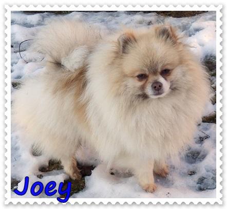 A&M´s Joey at Ancarado